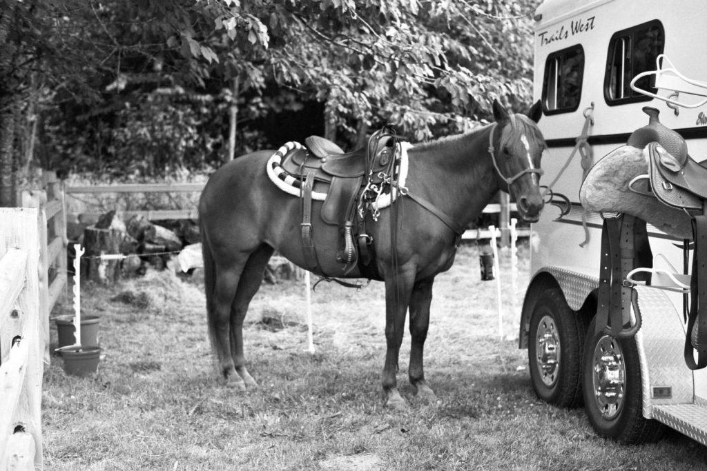 Preparing Dawn the horse for a ride.