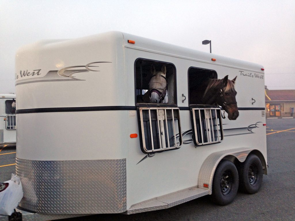 Horse Trailer Loading Safety when working around horses