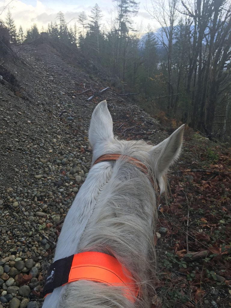 Trail riding, ID collar, April