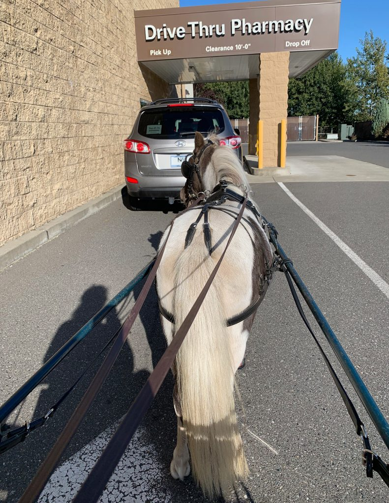Driving a horse and cart through a drive-thru pharmacy