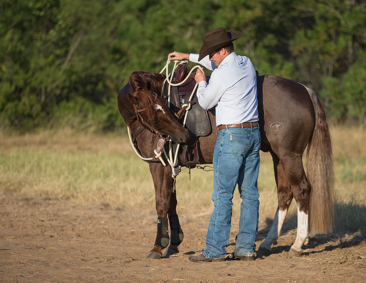 Flex your horse on both sides before mounting - Horse Safety Tips