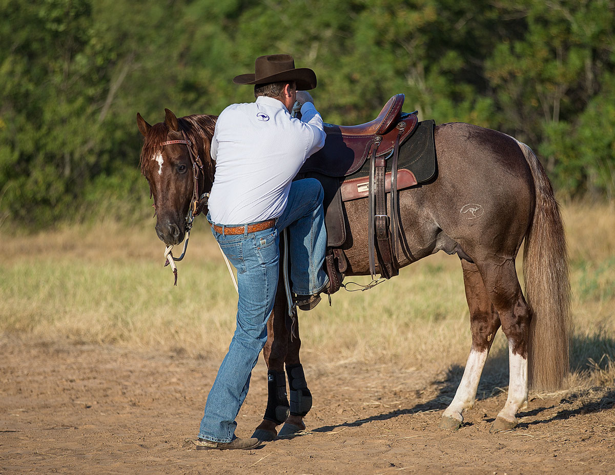 Flex their head to the side your mounting - Horse Safety Tips