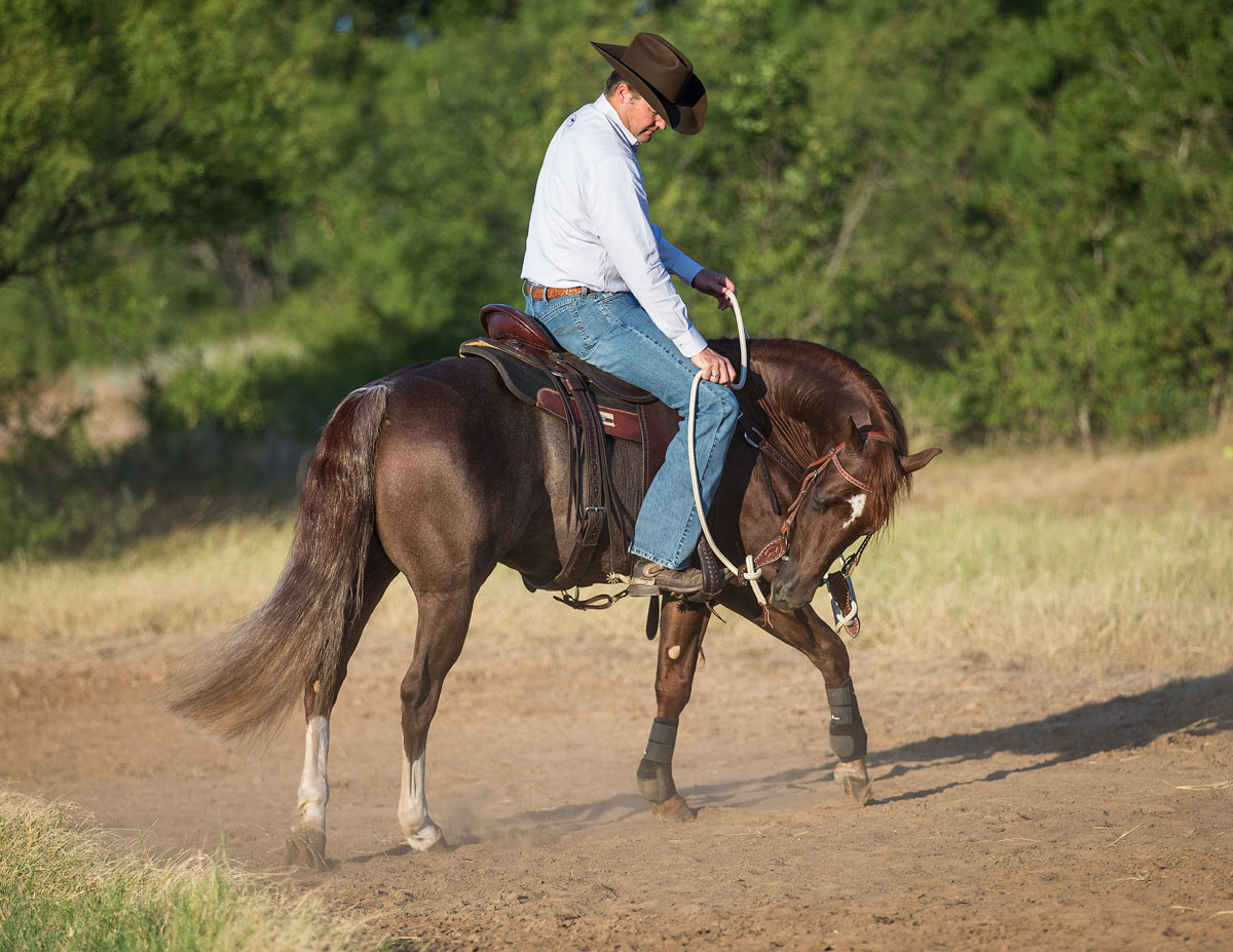 Bending at the Walk helps strengthen communication between rider and horse - Horse Safety Tips