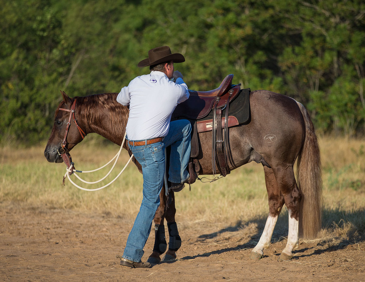 Mounting your horse can put you in a vulnerable position - Horse Safety Tips