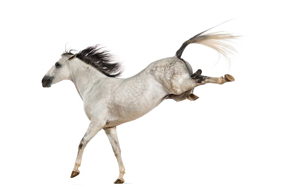 Horses are prey animals, so their first instinct is to run.